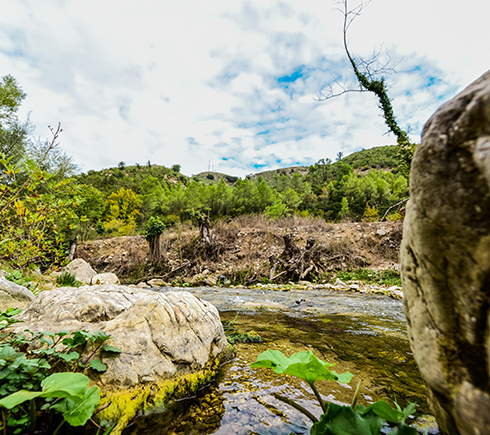 Green Coast Albania Beech Forest